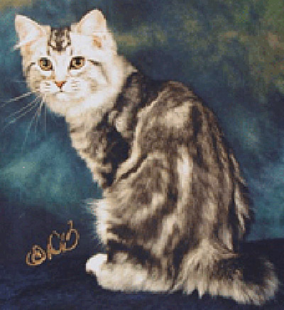 American Bobtail Kittens For