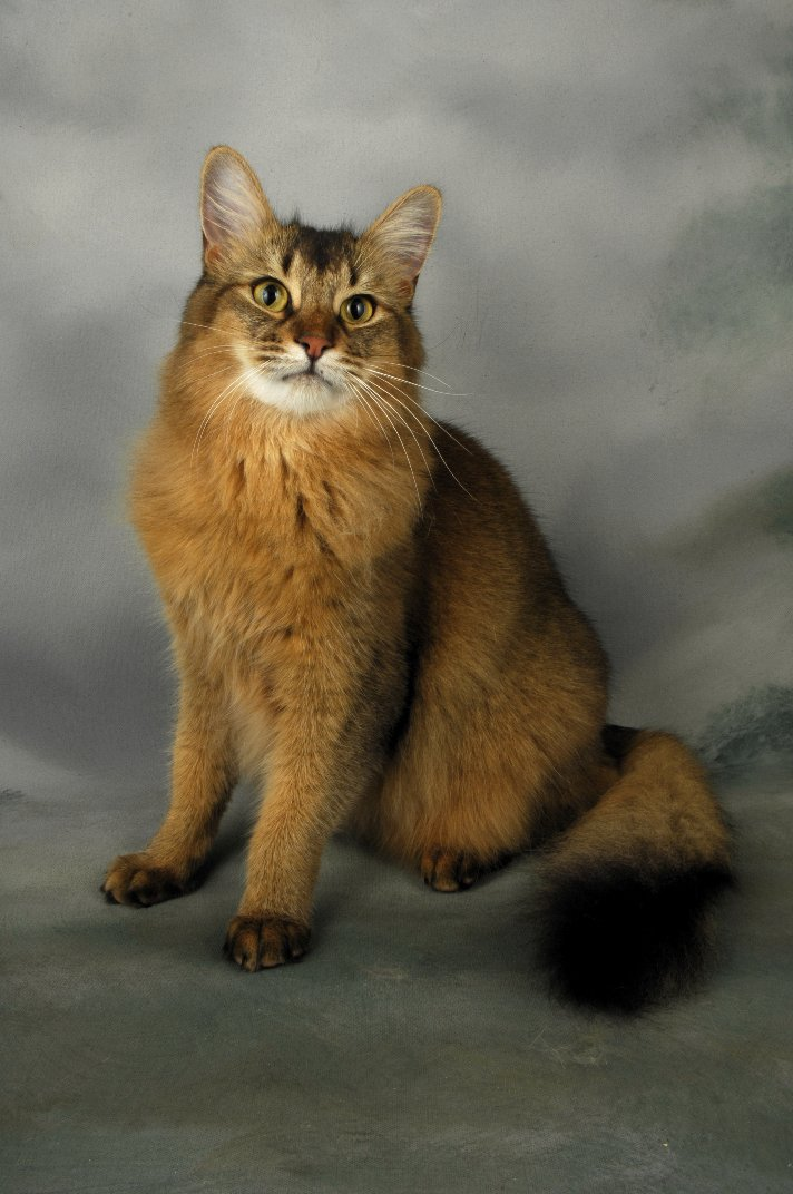 kitten breeds and pictures